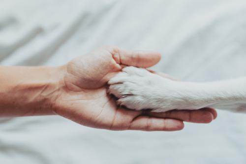 Frau Mensch Hund weiß Hand Tier Erwachsene Liebe Schule Zusammensein Freundschaft Freizeit & Hobby Finger niedlich Freundlichkeit Kontakt