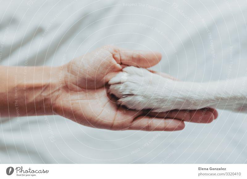 Frauenhand hält sanft eine weiße Hundepfote Freizeit & Hobby Schule Mensch Erwachsene Freundschaft Hand Finger Tier Haustier Pfote Liebe Freundlichkeit