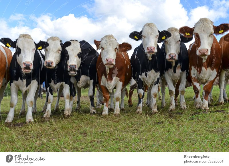 Kuhherde Lebensmittel Fleisch Wurstwaren Käse Joghurt Milcherzeugnisse Landwirtschaft Forstwirtschaft Umwelt Natur Landschaft Tier Himmel Klima Klimawandel