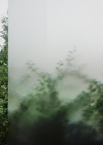 Verschleierungstaktik Pflanze Sträucher Zweig Blatt Fenster Glaswand Milchglas Unschärfe grün Schutz Am Rand schemenhaft Andeutung durchscheinend Farbfoto