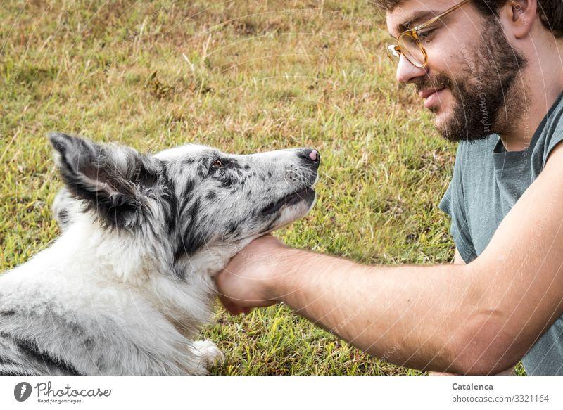 Streicheleinheiten Mensch Hund Jugendliche Sommer grün Junger Mann Tier Freude Wiese Gras Spielen braun grau Freundschaft maskulin Fröhlichkeit