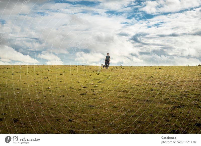 Spazieren maskulin 1 Mensch Landschaft Pflanze Tier Himmel Wolken Horizont Sommer Gras Wiese Weide Grasland Steppe Nutztier Hund gehen klein blau braun grün