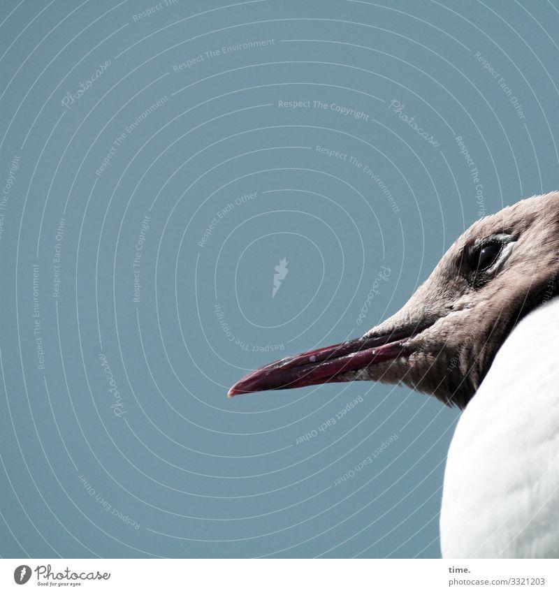 Hafentheaterpublikum tier vogel möwe profil schnabel himmel ernst konzentration auge gefieder blick
