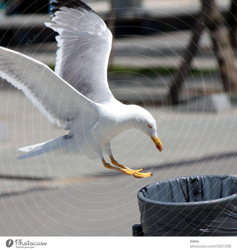 hier riecht's doch nach ... happy hour Vogelperspektive überraschung ungewöhnlich weiß rund struktur muster rätsel mülleimer plastiktüte möwe nahrungssuche