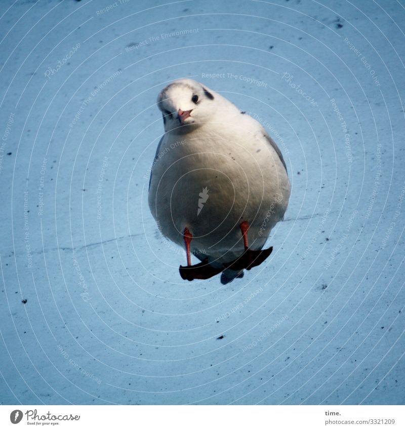 vertieftes Interesse | abgehoben Himmel Schönes Wetter Tier Vogel Möwe 1 Glasscheibe dreckig beobachten stehen Wachsamkeit Ausdauer standhaft Neugier