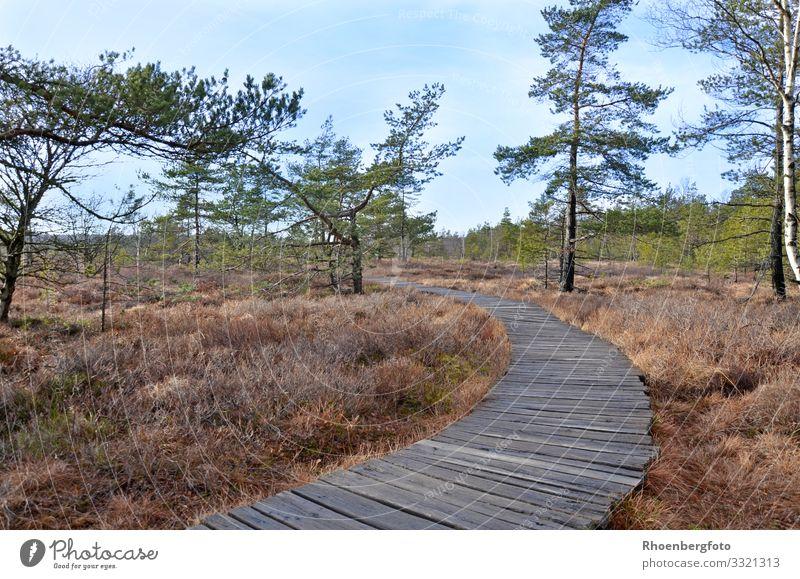 Holzpfad in einer Moorlandschaft Umwelt Natur Landschaft Pflanze Tier Urelemente Erde Luft Wasser Himmel Herbst Klima Klimawandel Wetter Schönes Wetter Dürre