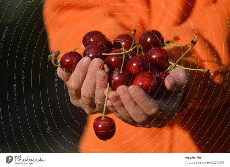 frisches Obst z.B. Kirschen | lebensnotwendig Hände Kind anbieten ernten lecker saftig süß rot Sommer sommerlich orange Früchte Frucht Lebensmittel Lebensfreude