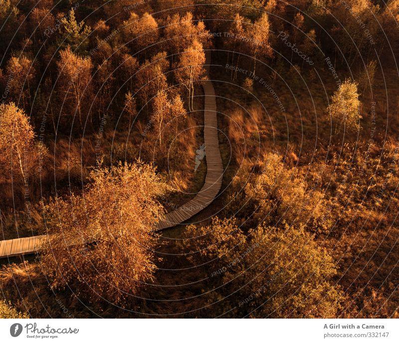 schwarze Moor Hochrhön Umwelt Natur Landschaft Sonne Sonnenlicht Herbst Klima Schönes Wetter Baum Wald Bayrische Rhön mehrfarbig Gold Wege & Pfade Holzweg