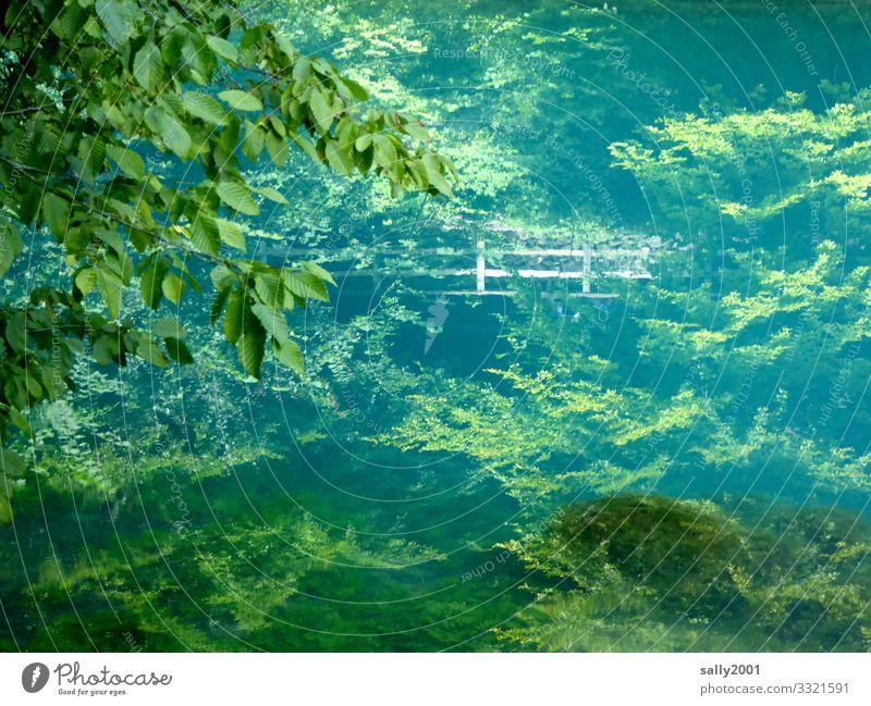 stille tiefe Wasser... Landschaft Pflanze Sommer Schönes Wetter Baum Wald Berge u. Gebirge Schwäbische Alb See Blautopf Deutschland Baden-Württemberg blau grün