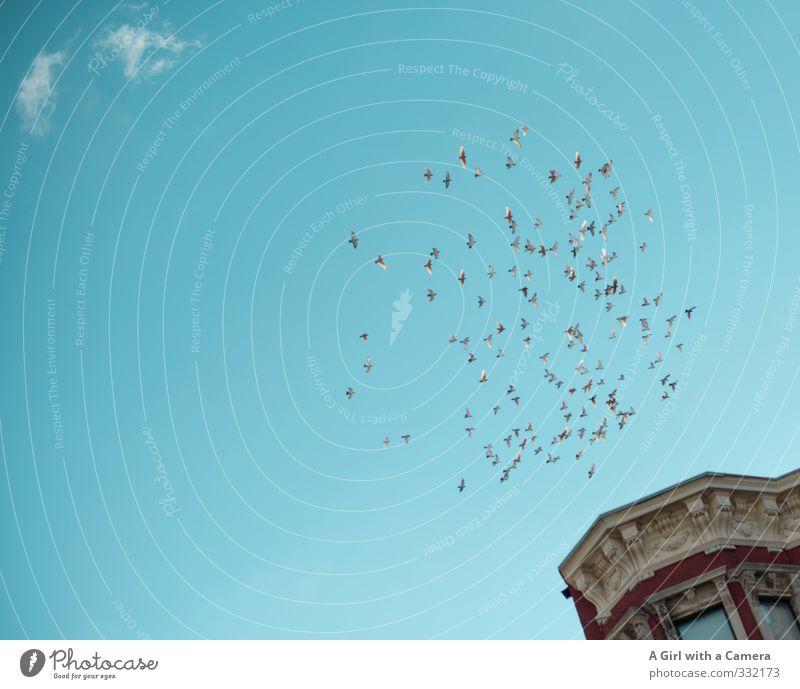 fleeing Harlem Himmel Wolken Sommer Schönes Wetter Vogel Schwarm fliegen blau Freiheit Froschperspektive oben Zusammensein frei Stuck Gedeckte Farben