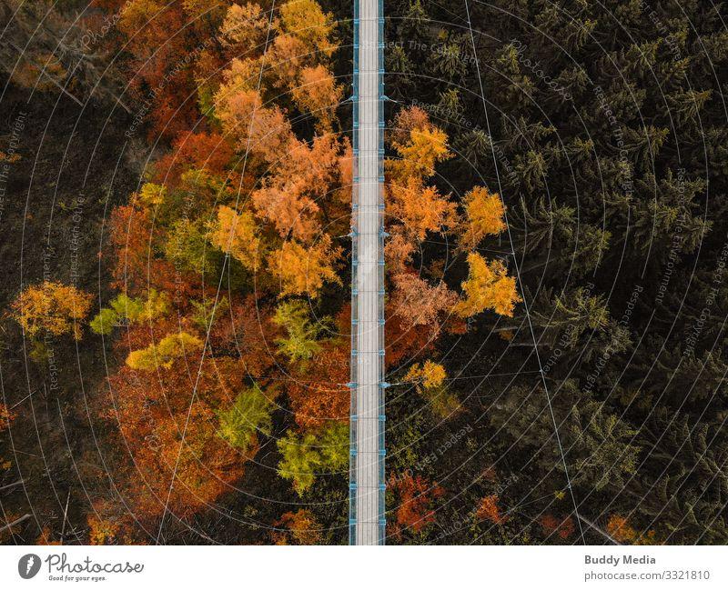 Drohnenaufnahme der Hängeseilbrücke Geierlay Natur grün weiß Baum Wald Ferne schwarz Wärme gelb Deutschland Tourismus orange grau Ausflug wandern gold