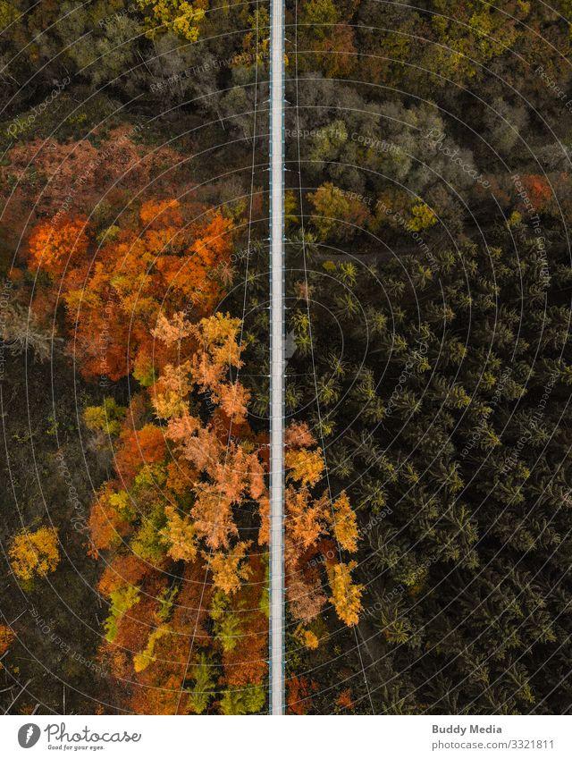 Drohnenaufnahme der Hängeseilbrücke Geierlay Tourismus Abenteuer Sightseeing Expedition Camping wandern Natur Landschaft Herbst Baum Wald Schlucht Hunsrück