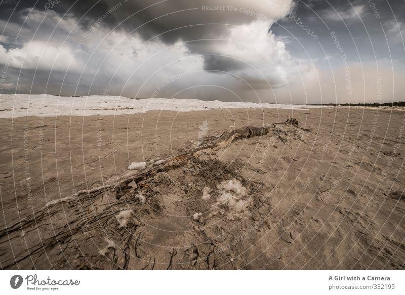 Parallelen Umwelt Natur Landschaft Winter schlechtes Wetter Unwetter Wind Sturm Küste Ostsee bedrohlich Sandstrand Strand Strandgut Wolken Wolkenformation