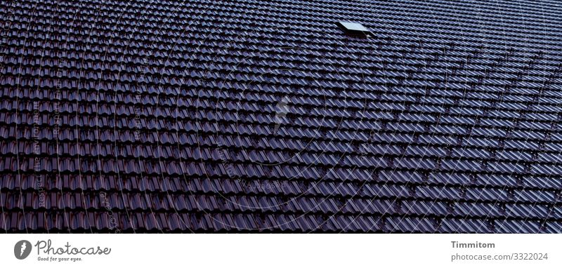 Dach Haus Linie ästhetisch kalt blau schwarz Gefühle Schutz Dachziegel Dachfenster Schwarzwaldhaus Farbfoto Außenaufnahme Menschenleer Tag