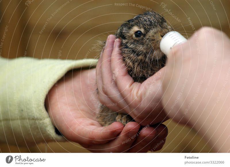 aufpeppeln Mensch feminin Haut Hand Finger Umwelt Natur Tier Haustier Tiergesicht Fell 1 Tierjunges kuschlig klein nah natürlich weich braun grün