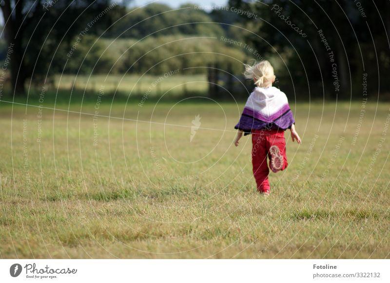 unbeschwert Mensch feminin Kind Mädchen Kindheit Leben 1 3-8 Jahre Umwelt Natur Landschaft Pflanze Herbst Baum Gras Park Wiese frei Fröhlichkeit hell