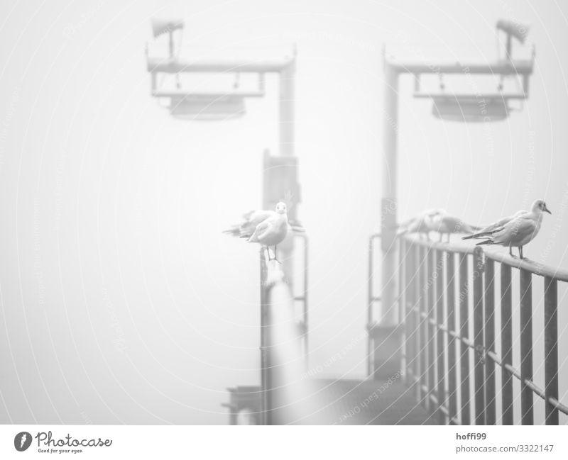 Möwen im Nebel Herbst Winter Wetter schlechtes Wetter Anlegestelle Steg Lampe Geländer Hafen sitzen stehen warten ästhetisch kalt maritim nass trist grau silber
