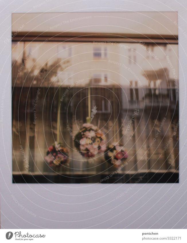 Polaroid-Blick von außen durchs Fenster. Altmodische Vorhänge und Blumenschmuck Haus alt Reflexion & Spiegelung altmodisch Dekoration & Verzierung Kranz Gesteck