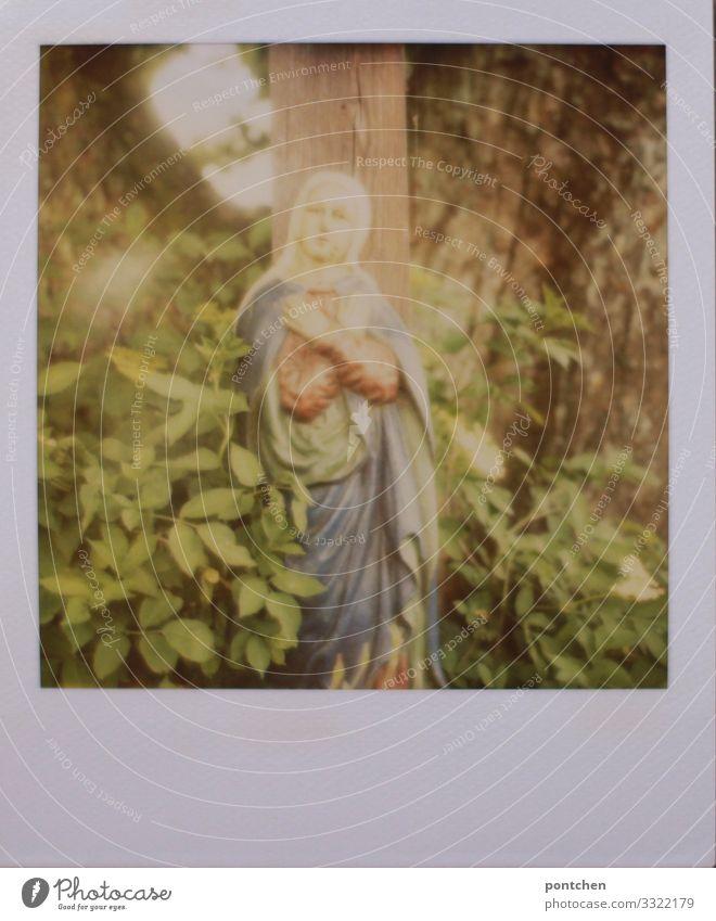 Polaroid zeigt marienstatue vor Baum und grünen Blättern. Religion Kunst Dekoration & Verzierung Sammlerstück Glaube Religion & Glaube heilig Heiligenfigur