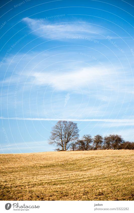 landschaft mit feld und baumgruppe. Feld Landschaft Baum Baumgruppe Himmel Natur Wiese grün Wolken blau Außenaufnahme Gras Farbfoto Textfreiraum oben Umwelt