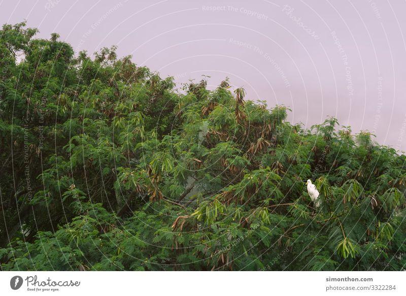 Bird Umwelt Natur Landschaft Pflanze Tier Himmel Baum Garten Park Wald Urwald Vogel weiß Baumkrone Rio de Janeiro Brasilien Farbfoto Außenaufnahme