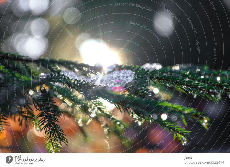 ein stück winter Natur Pflanze Winter Schönes Wetter Eis Frost Schnee Baum Wildpflanze Wald frisch hell nachhaltig nass natürlich positiv Tannenzweig