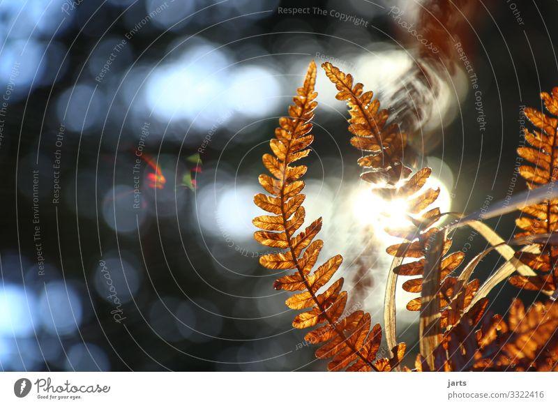 zusammen Natur Landschaft Schönes Wetter Pflanze Farn Wald hell natürlich Farbfoto Außenaufnahme Nahaufnahme Menschenleer Textfreiraum links Tag Licht Schatten