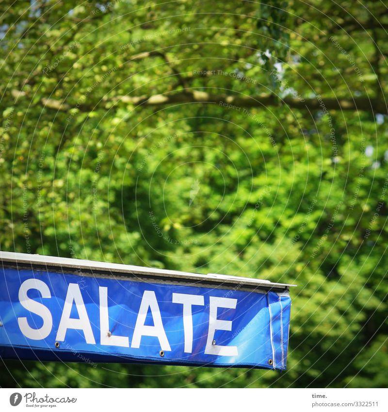 Grünzeug | Geschriebenes blau grün Baum Wald Gesundheit Leben Schriftzeichen Schilder & Markierungen Kreativität Perspektive Schönes Wetter Idee Neugier