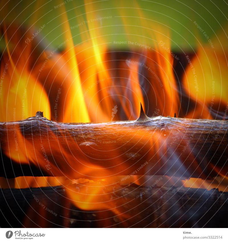 Osterfeuer – heute nur in den eigenen vier Wänden! | corona thoughts brennen osterfeuer flamme heiß Ast Rosenzweig Dorn holz