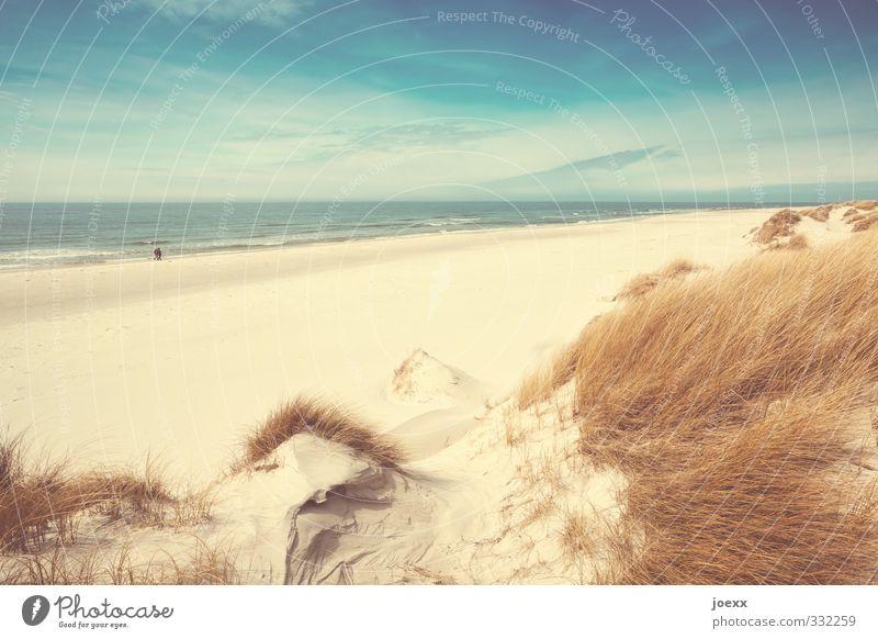 Alleine Mensch Himmel Natur Ferien & Urlaub & Reisen Meer Landschaft Wolken Strand Ferne Erwachsene Gras Küste Freiheit Paar Horizont Wellen
