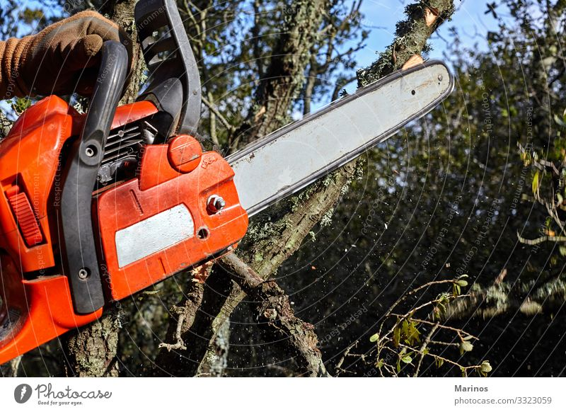 Mann, der im Wald mit einer elektrischen Kettensäge Bäume fällte. Arbeit & Erwerbstätigkeit Industrie Werkzeug Säge Technik & Technologie Erwachsene Hand Natur