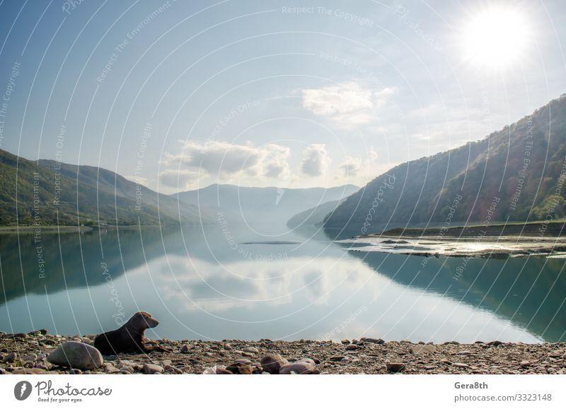 Himmel Ferien & Urlaub & Reisen Natur Hund Sommer Pflanze blau Farbe grün Landschaft Sonne Baum Erholung Wolken Tier Einsamkeit