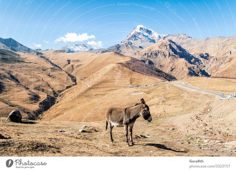 Natur Pflanze blau Landschaft Tier Berge u. Gebirge Straße Herbst gelb natürlich Schnee Gras Tourismus Felsen Ausflug Aussicht