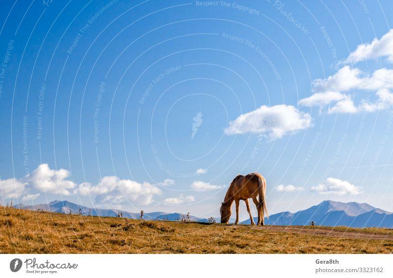 Pferd auf einem Hintergrund von Bergen und Himmel in Georgien Ferien & Urlaub & Reisen Tourismus Berge u. Gebirge Natur Landschaft Pflanze Tier Wolken Herbst