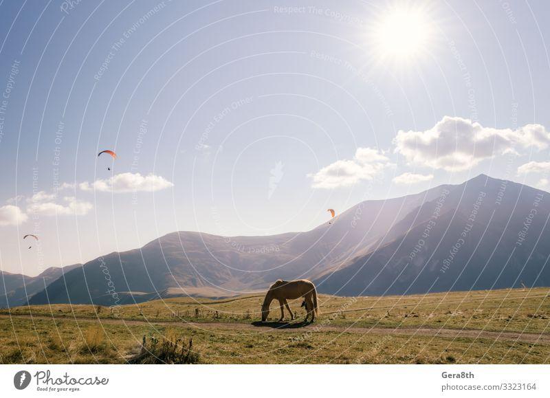 Himmel Ferien & Urlaub & Reisen Natur Pflanze blau Landschaft Sonne Wolken Tier Berge u. Gebirge Straße Herbst gelb Sport Gras Tourismus