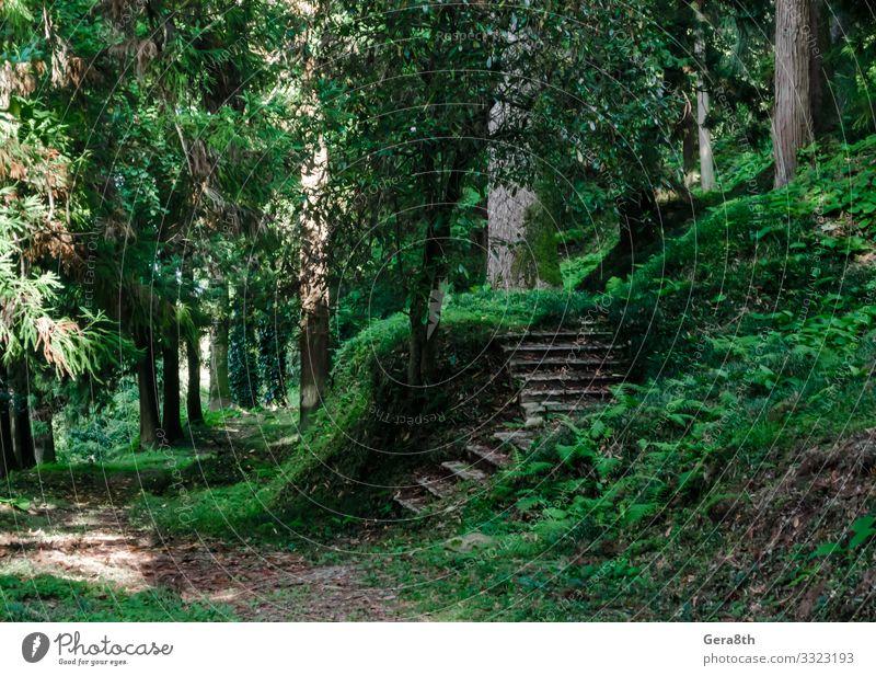 Wald mit hohen Bäumen und Steinstufen in Georgien Ferien & Urlaub & Reisen Tourismus Ausflug Sommer Tapete Natur Landschaft Himmel Herbst Klima Wärme Baum Gras