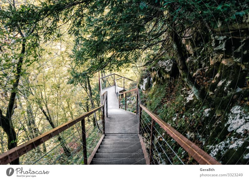 Ferien & Urlaub & Reisen Natur alt Pflanze grün Landschaft Baum Blatt Wald Berge u. Gebirge Straße Herbst Wärme natürlich Wege & Pfade Tourismus