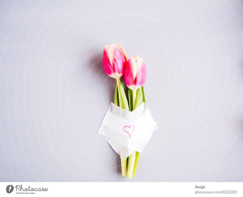 Zwei rosa Tulpen mit einem Pflaster und einem Herz Valentinstag Muttertag Hochzeit Geburtstag Blume Blatt Blüte Zeichen Blühend Duft außergewöhnlich trendy