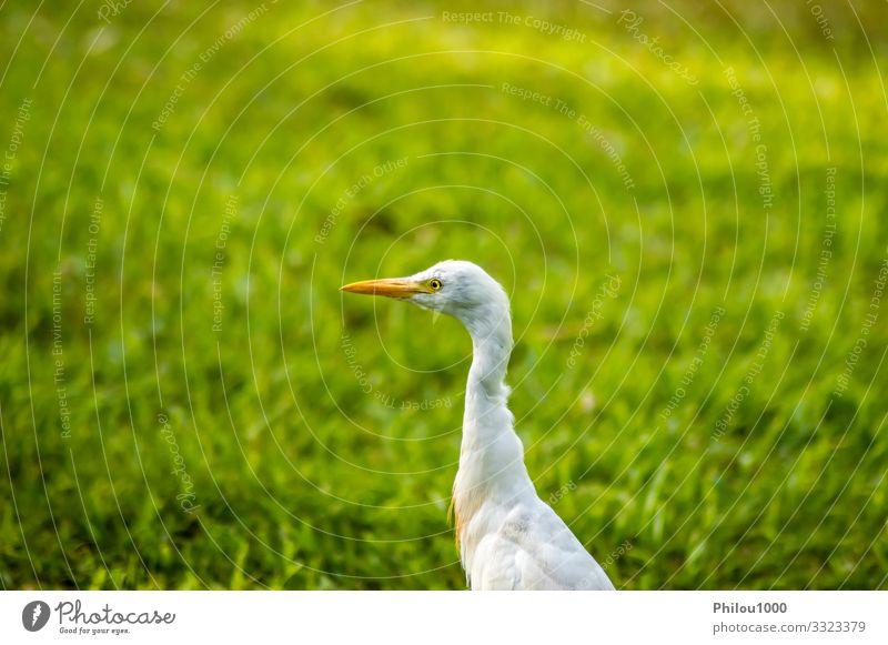Silberreiher im Wald Sommer Familie & Verwandtschaft Umwelt Natur Tier Blatt Wiese Vogel beobachten Wachstum Freundlichkeit lang natürlich grün weiß