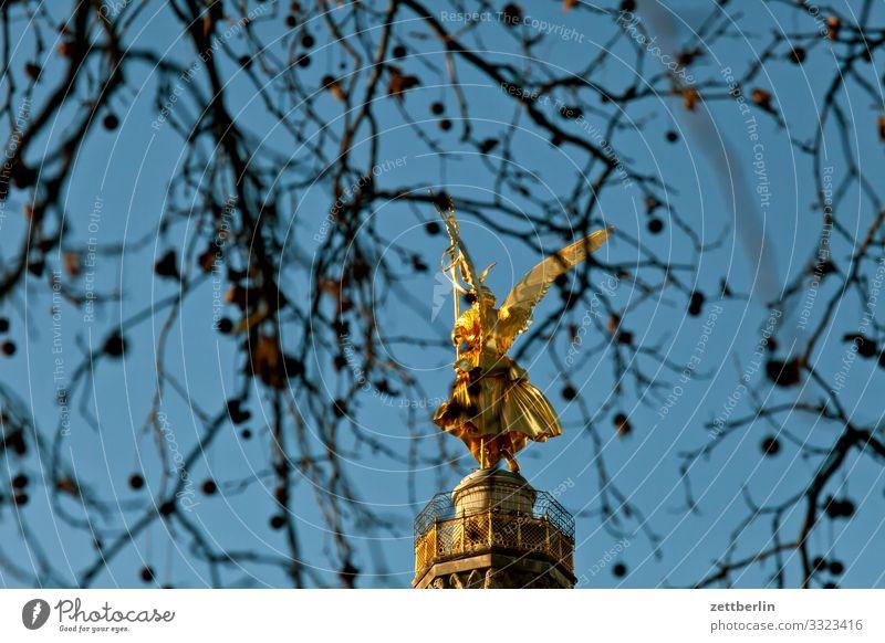Siegessäule hinter Platane Baum Berlin blattgold Denkmal Deutschland else Körper Figur Goldelse großer stern Hauptstadt Himmel Himmel (Jenseits) Menschenleer