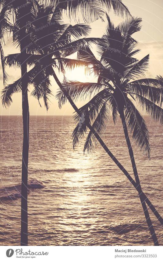 Kokospalmen Silhouetten bei Sonnenuntergang. exotisch Erholung ruhig Ferien & Urlaub & Reisen Tourismus Ausflug Sommer Sommerurlaub Sonnenbad Strand Meer Insel