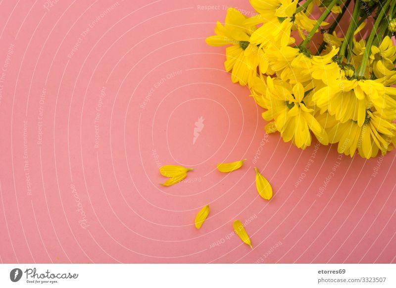 Gelber Chrysanthemenstrauß auf gelbem Hintergrund. Raum kopieren Blume Blumenstrauß Blüte geblümt Frühling rosa Natur Pflanze vereinzelt Gänseblümchen Blatt
