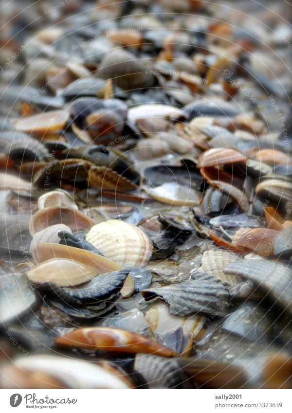 bunte Muschelschalen... Strand Strandgut Haufen viel Meer Sand Schwache Tiefenschärfe zerbrochen kaputt