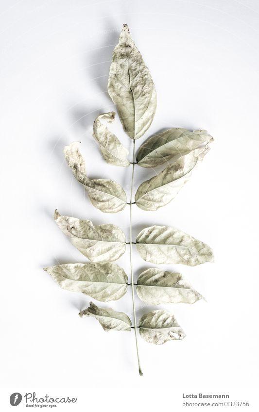 Fundstück Umwelt Natur Pflanze Blatt ästhetisch schön grau grün natürlich Biologie Farbfoto Gedeckte Farben Nahaufnahme Detailaufnahme abstrakt Menschenleer