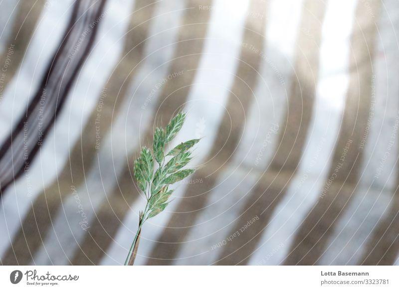 Grashalm Kunst Umwelt Natur Pflanze Sommer Blüte Halm ästhetisch nachhaltig natürlich schön braun grün weiß ökologisch Muster Dekoration & Verzierung