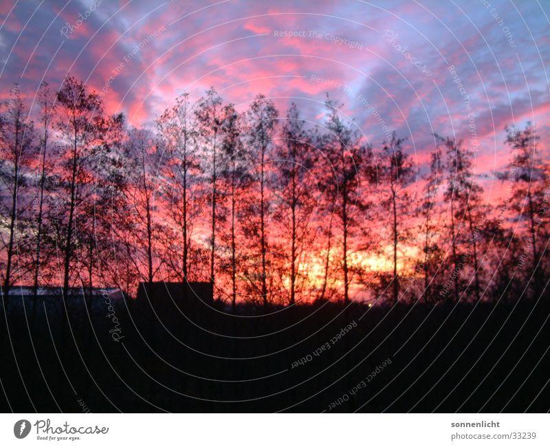 sonnenuntergang Naturphänomene Röte Sonnenuntergang Baum Wolken Himmel Abend Abenddämmerung Himmelszelt Firmament