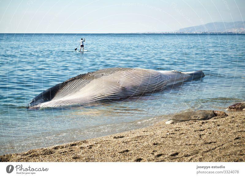 Natur blau Stadt Wasser Meer Strand Küste Tod Sand Körper Wellen Schmerz Säugetier Mittelmeer sparen Desaster