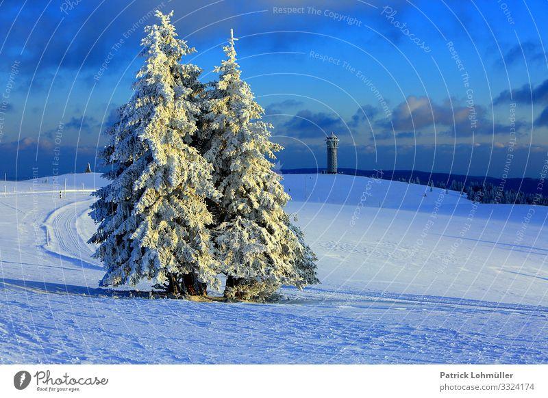 Schneebäume Ferien & Urlaub & Reisen Tourismus Ausflug Winterurlaub Berge u. Gebirge wandern Umwelt Natur Landschaft Himmel Klima Klimawandel Schönes Wetter Eis