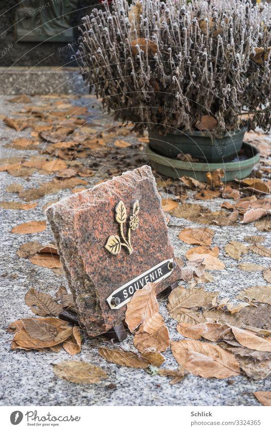 Gedenken Grab Zeichen Schriftzeichen braun gold schwarz weiß Gedenktafel Grabstein Herbstlaub Pflanze Blume vertrocknet Tod Trauer vergessen Winter schäbig