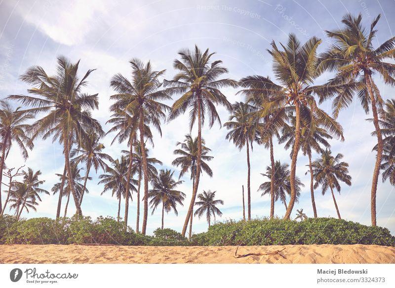 Kokosnusspalmen an einem Strand. Erholung Ferien & Urlaub & Reisen Tourismus Ausflug Abenteuer Sommer Sommerurlaub Insel Natur Landschaft Sand Himmel